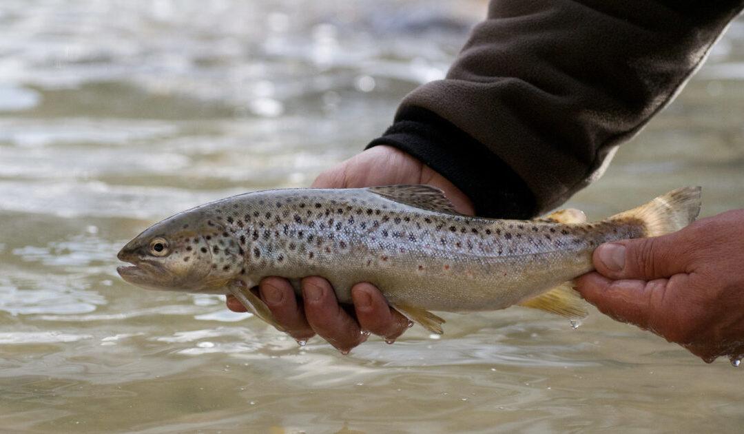 Bilan sur l'ouverture de la pêche à la truite de mars 2021